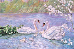 SWAN FAMILY 1,500 PIECE PUZZLE