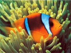 CLOWNFISH 500 PIECE PUZZLE GLOW-IN-THE-DARK